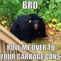 BearSnatcher