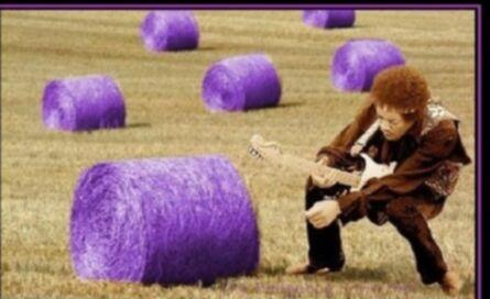189720309_purplehays.jpg.8e6a3ebeae313fae7d310678c1420583.jpg